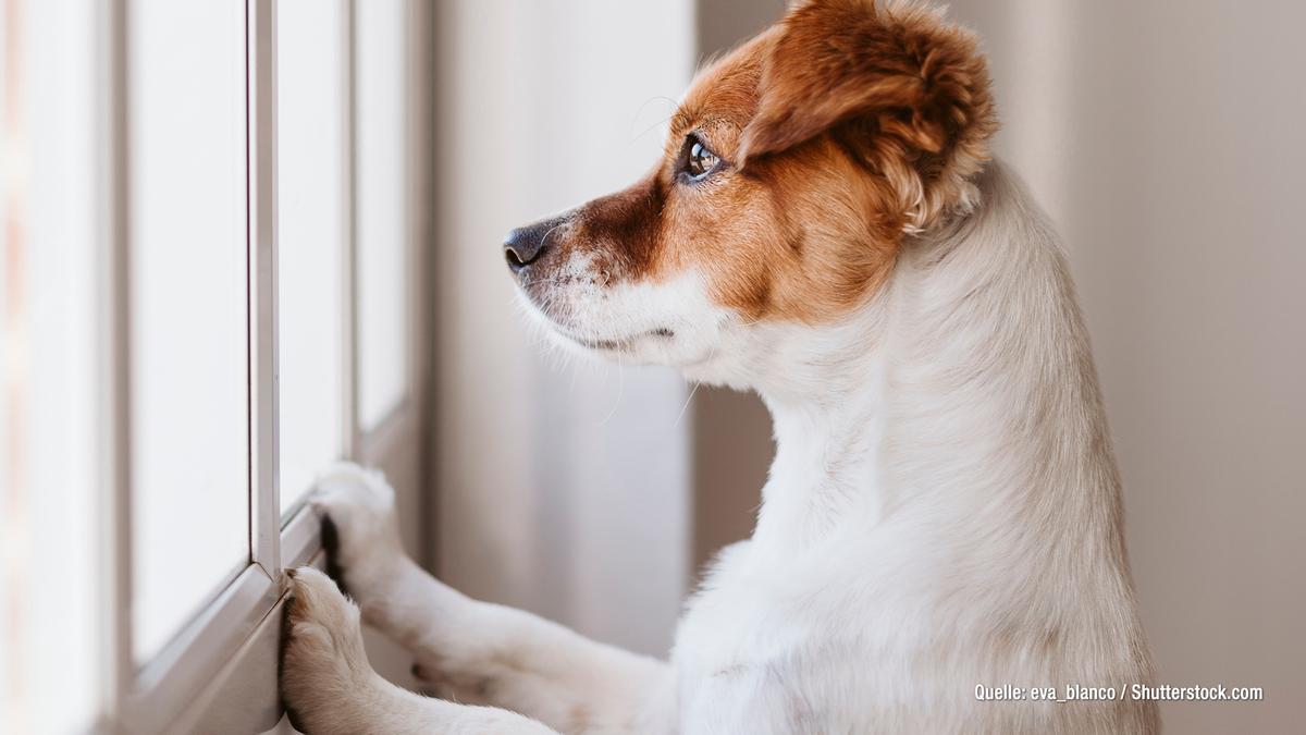 Hund allein lassen: Mit diesen Tricks klappt es