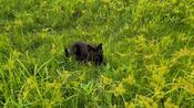 Cat finds herself a nice little spot in nature
