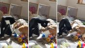 Bunny and cat share a sweet moment together